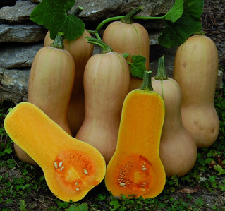 The Seasoning of Fall Starts With Butternut Squash