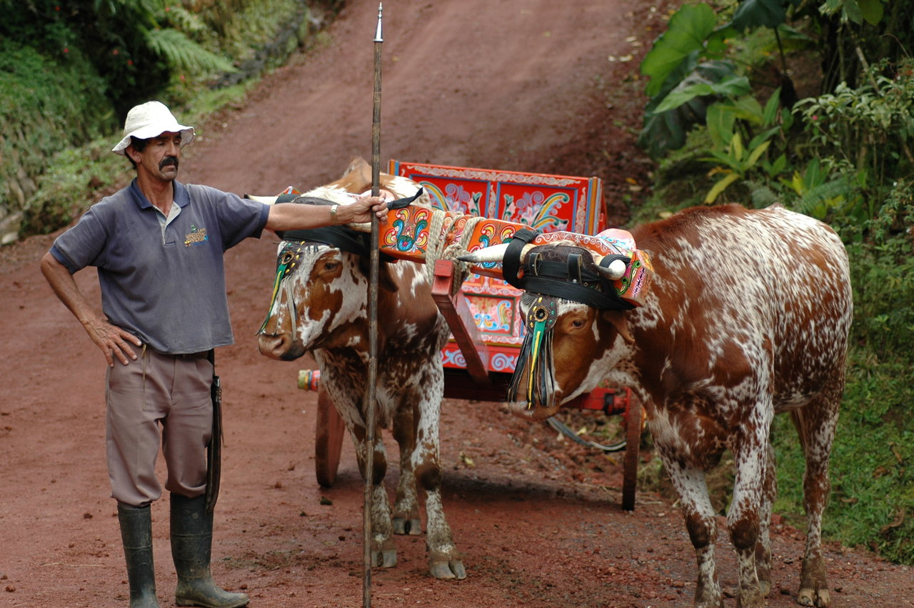typical ox cart