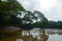 Tempisque River