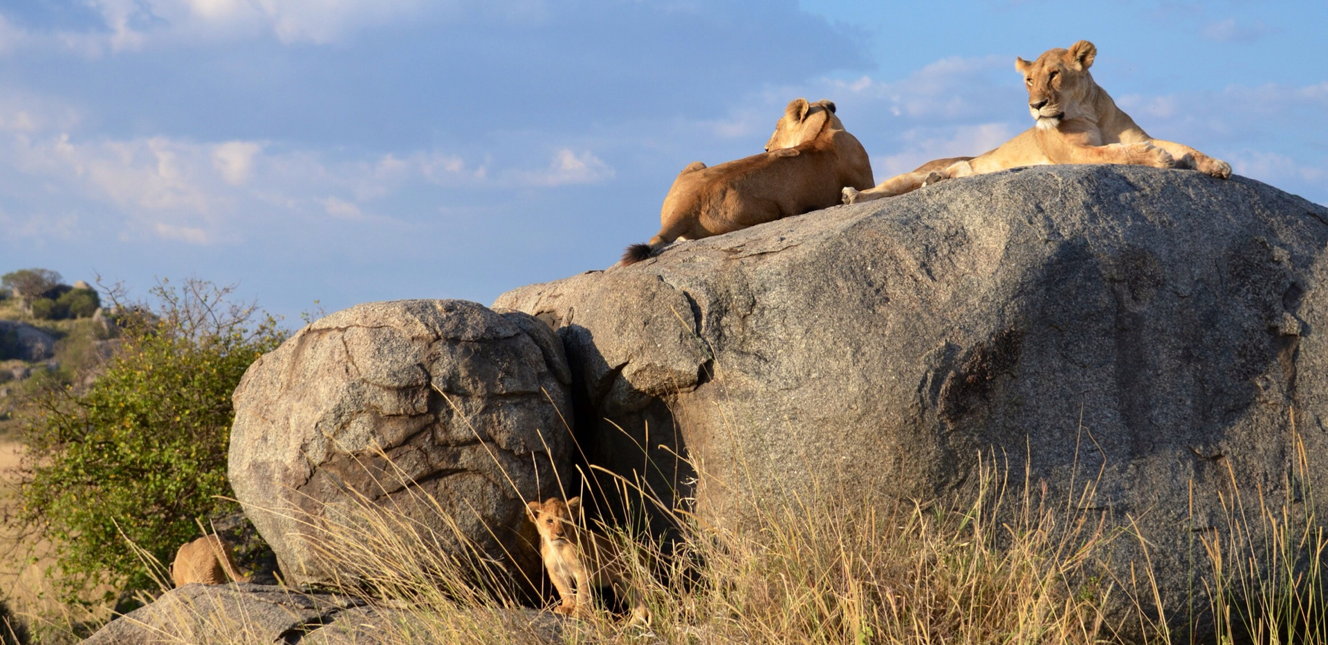 mothers and cubs