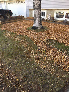 Fallen leaves on lawn