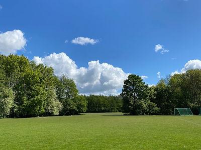grassy park with soccer net