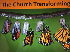 """A photo of a monarch butterfly in multiple stages of the metamorphasis from cocoon to butterfly. Above are the words """"The Church Transforming"""""""