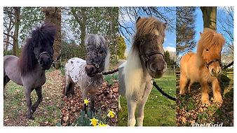 4 Pony Header.jpg
