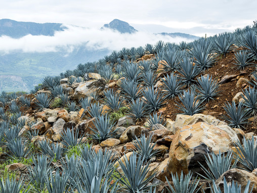 Tequila: All You Need To Know