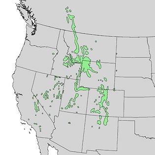 440px-Pinus_flexilis_range_map_1.png