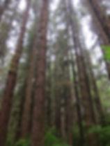 SITKA FOREST.JPG