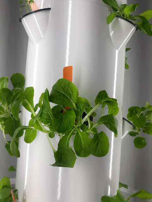 Seedlings sprouted into plants!