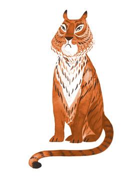 Grumpy Tiger colour