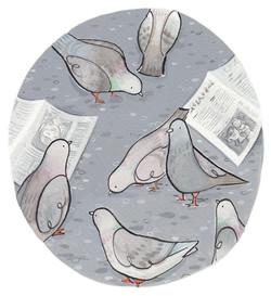 Pigeons - Penny Neville-Lee