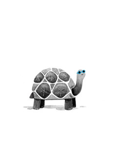 Tortoise Specs