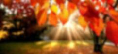 Free-HD-Fall-Wallpapers-620x349 Autumn.j