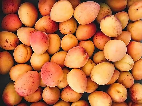 Blenheim Apricot Lug Reservation