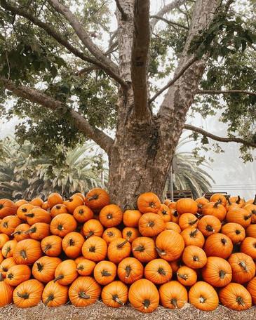 pumpkin pile.jpg