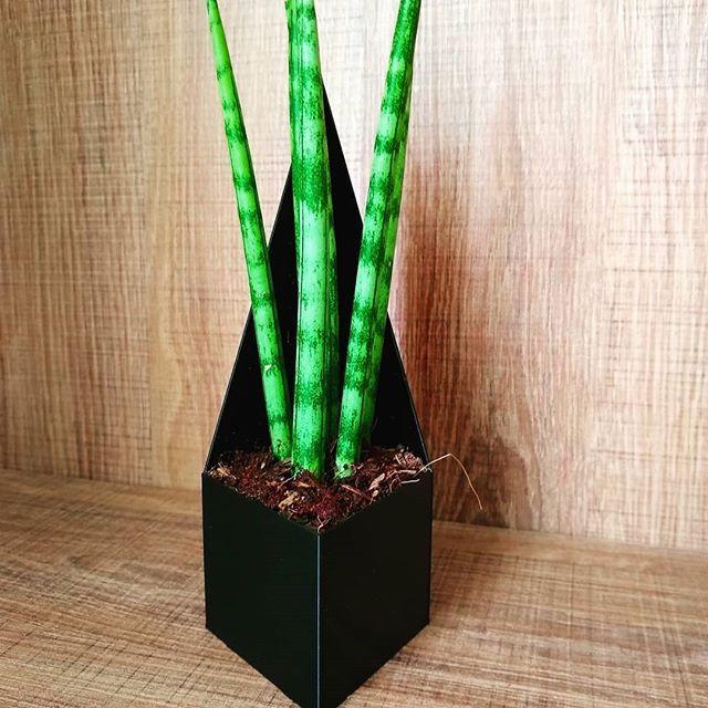 Planta de vaso sem furo.