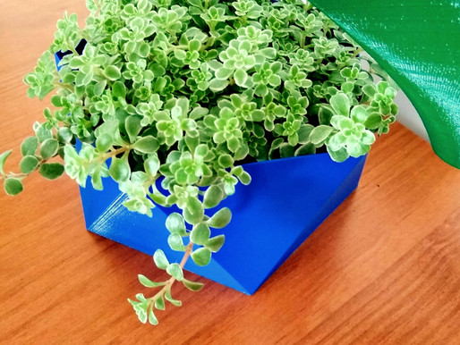 Melhor horário para regar suas plantas