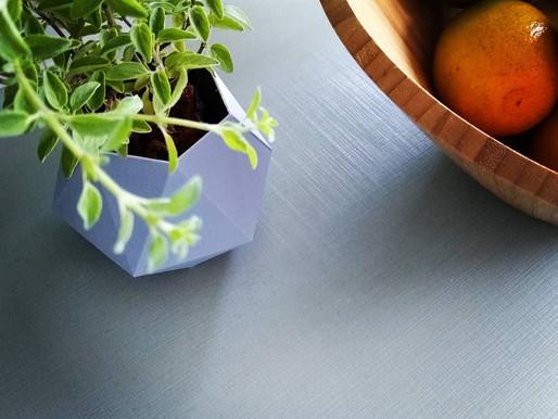 Cultivando Ervas Aromáticas em casa