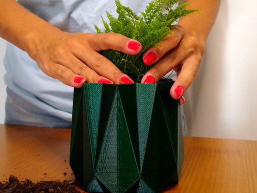 Replantando sua planta