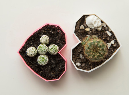 Plantas que ajudam a proteger e trazem boas energias