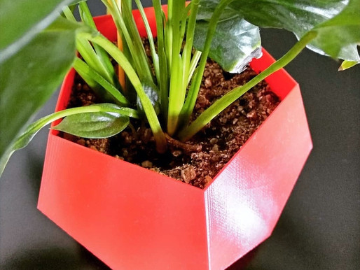 Plantas com Pouca Luz em Casa