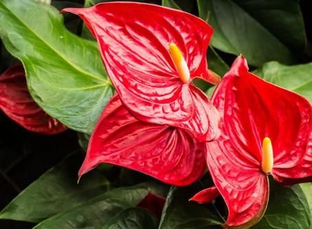 Quais plantas utilizar em ambientes e internos