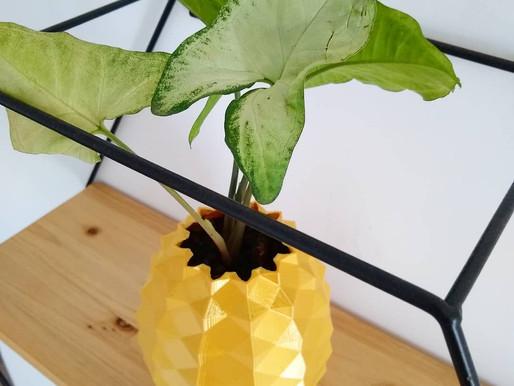 Planta Singônio
