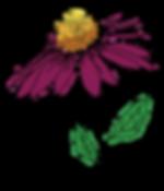 echinaeca_color_big.png