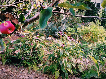 1849 Medicine Garden