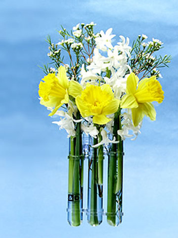Flex Window Vase- 3 Test Tubes
