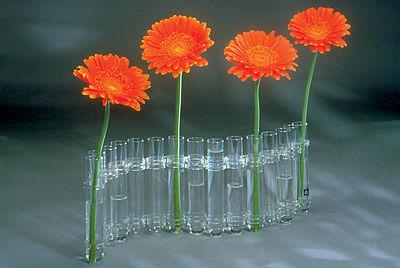 Test Tube Vase