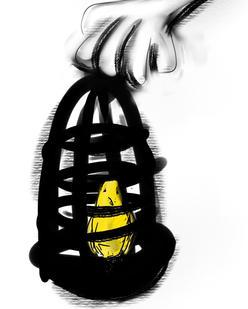 canary caged.jpg