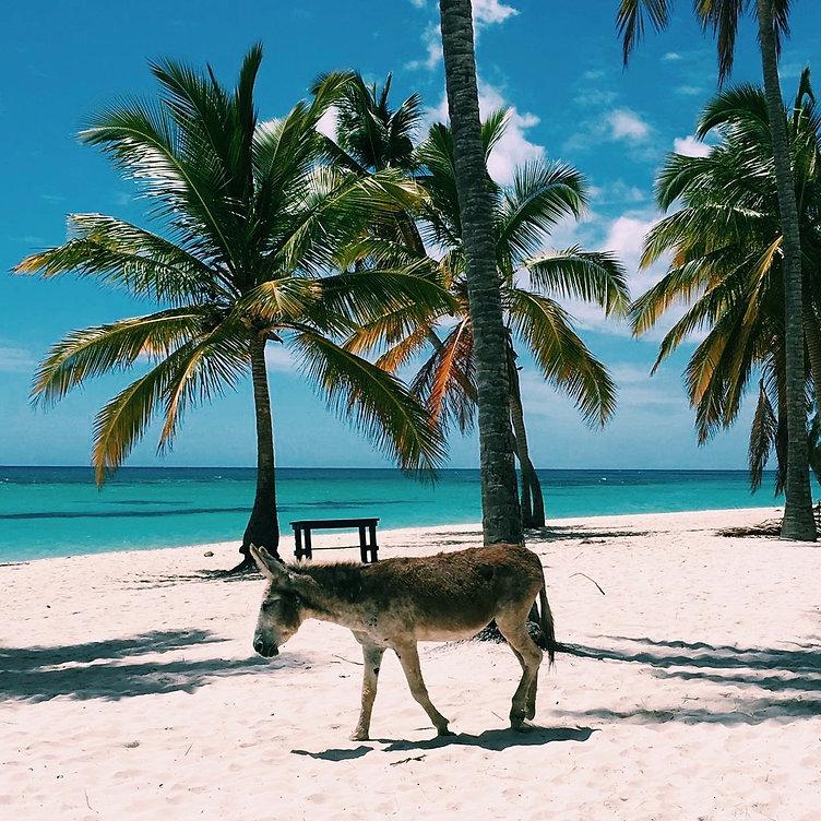 travellink.info_Dominicaanse Republiek_I