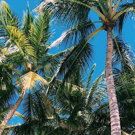 Dominicaanse Republiek_Isla Saona.jpeg