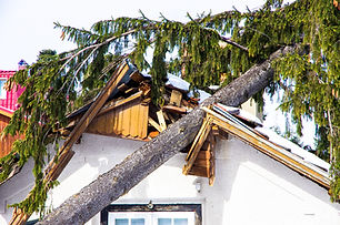 Damaged roof of the house, a tree that f