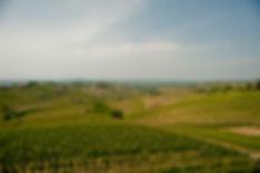Sottimano-vigne.jpg