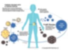 AIR Therapy diagram v2_edited.jpg