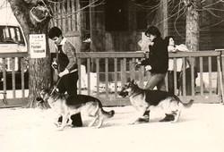 Esposizione pastori tedeschi 1982 REGINE