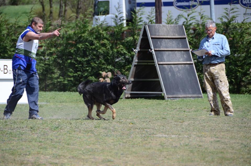 obbedienza Trofeo Lago di Varna 2015