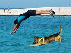 Dog Olimpiadi 2010