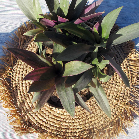 table decor - plant and natural mat