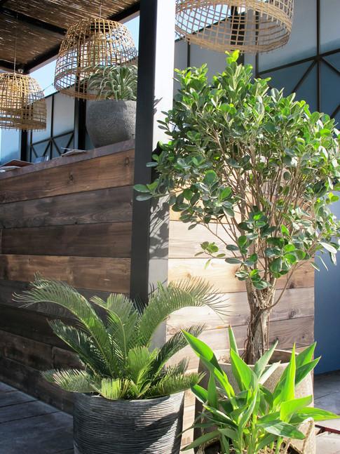 wooden bar front