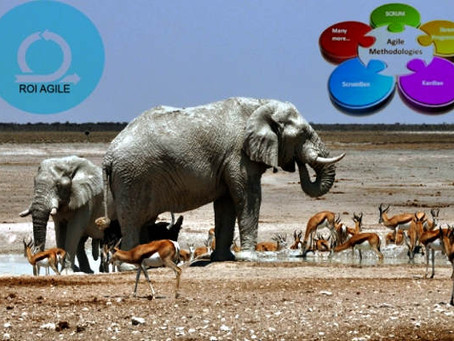 Elefantes, gacelas y metodologías ágiles
