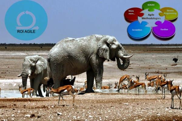elefantes, gacelas, metodologías ágiles