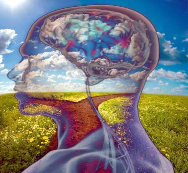 Campo, cielo, transparencia de cabeza, cerebro
