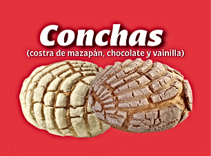 Conchas1.png