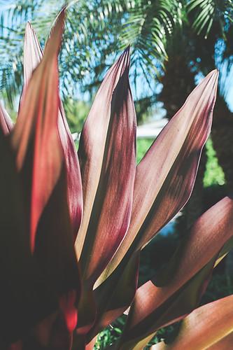 Tropical_Vibes-194.jpg