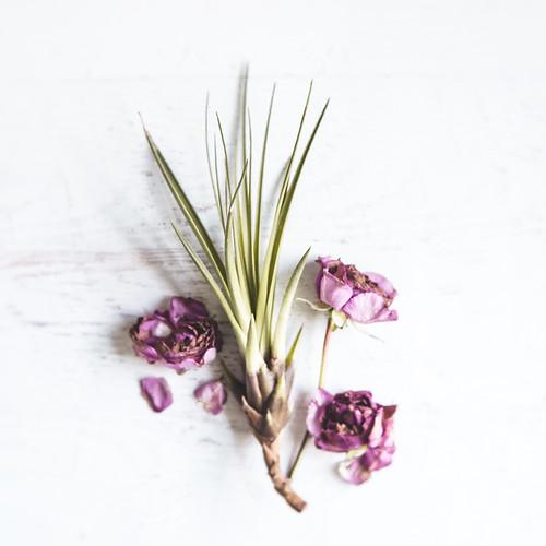Floral_Neutral_Skin_Herb_Spa-172.jpg