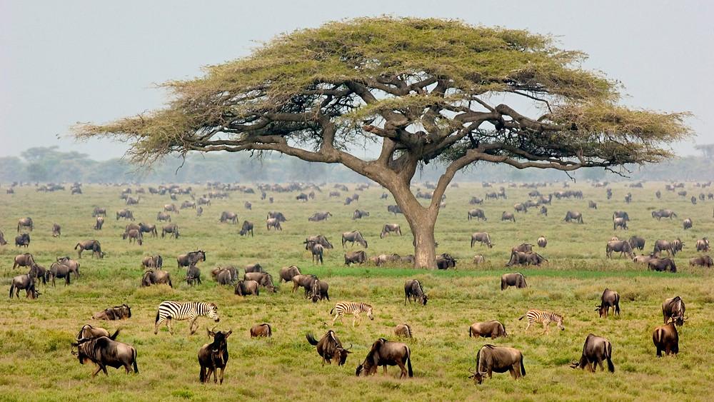 Танзания продает туристам сафари и пляжи Занзибара