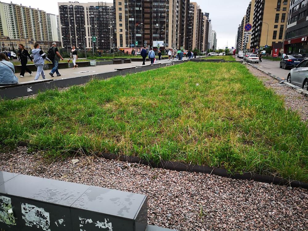 "Тот самый ""газон"" на пр. Менделеева в Мурино, который жители защищают от строительства фуд-холла"