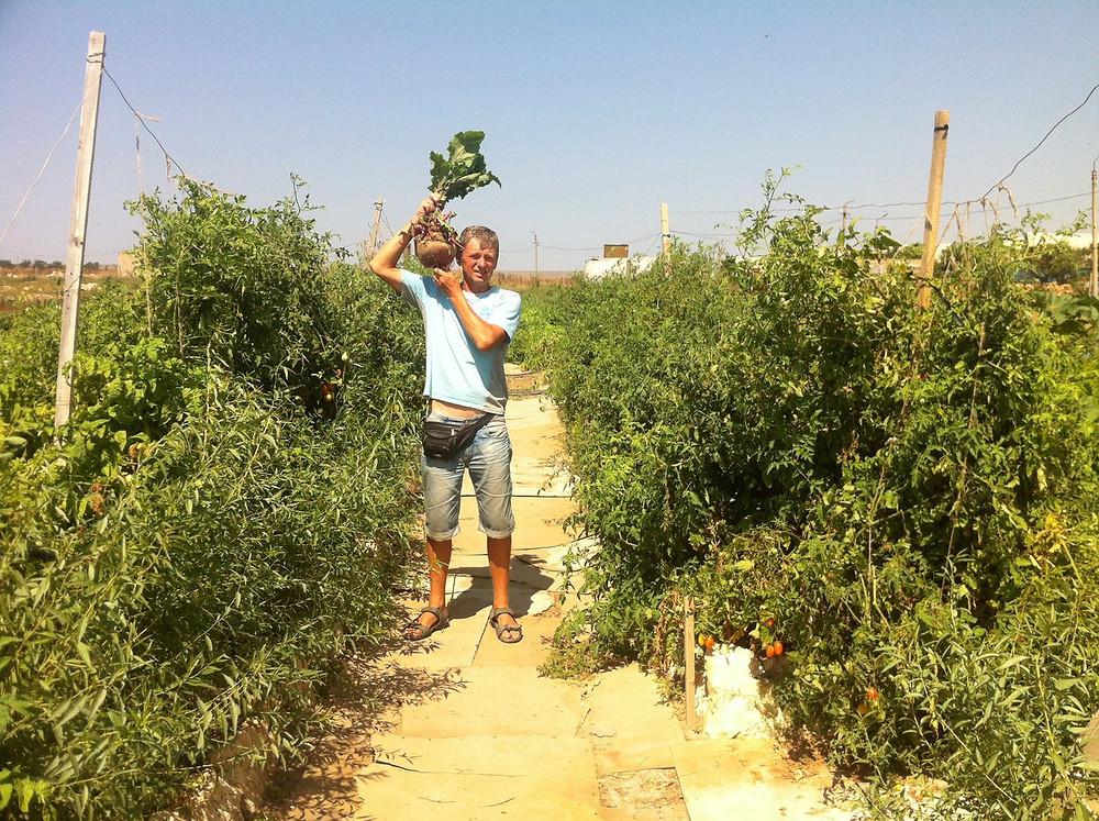 Основатель эко-фермы и эко-курорта в Крыму Сергей Сидоренко демонстрирует выращенный овощ в условиях фактически пустыни Западного Крыма